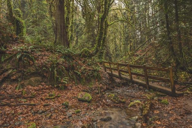 Adembenemend uitzicht op een houten brug in een tropisch bos bedekt met mos Gratis Foto
