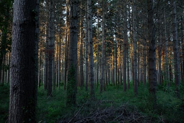 Adembenemend uitzicht op een prachtig bos met veel bomen Gratis Foto