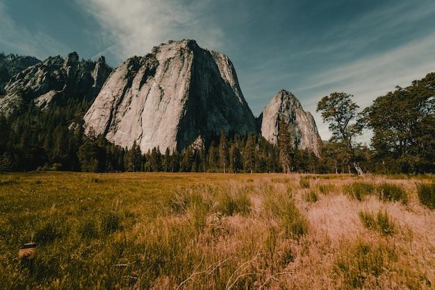 Adembenemend verbazingwekkend landschap van een prachtig bos op het platteland Gratis Foto