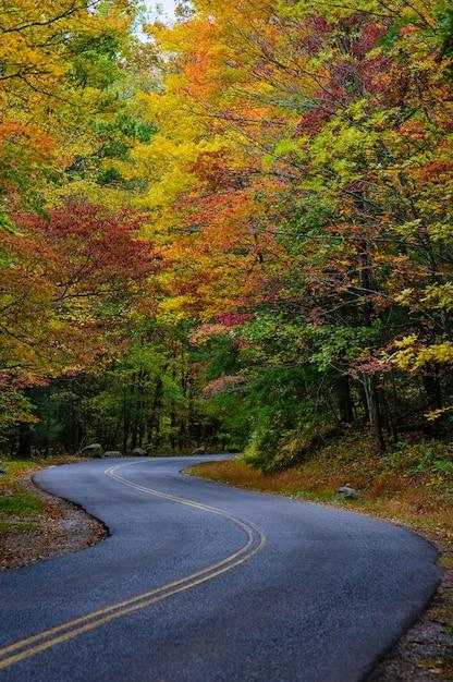 Adembenemende weg omringd door prachtige en kleurrijke herfstbomen Gratis Foto