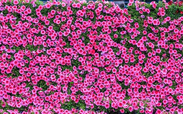 Ader schoonheid behang kleurrijke patroon groei Gratis Foto