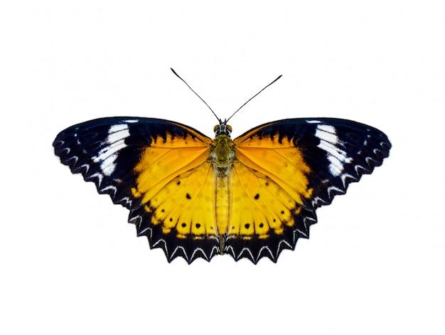 Afbeelding van luipaard lacewings vlinder (cethosia cyane euanthes) geïsoleerd op een witte achtergrond Premium Foto
