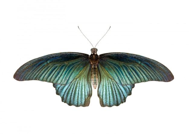 Afbeelding van mannelijke grote mormoonse vlinder (papilio polytes) geïsoleerd op een witte achtergrond Premium Foto