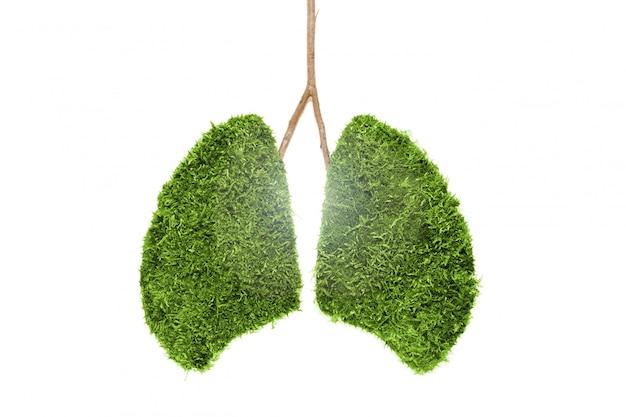 Afbeelding van menselijke longen van groen mos. geïsoleerd Premium Foto