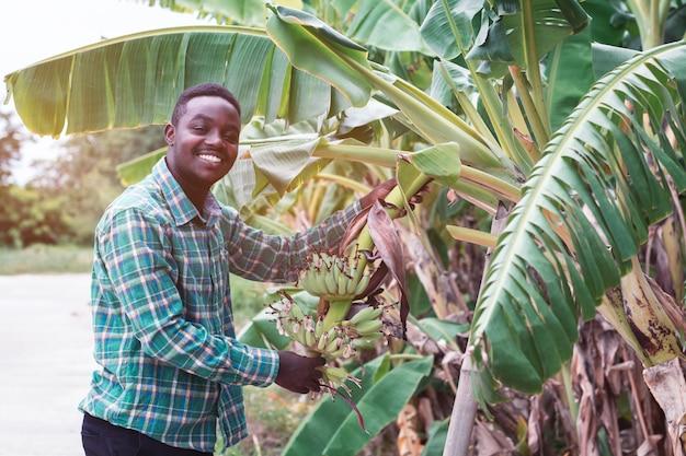 Afrikaanse landbouwer die groene banaan op landbouwbedrijf houdt Premium Foto