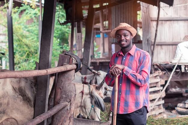 Afrikaanse landbouwers voedende koeien met gras bij het landbouwbedrijf Premium Foto