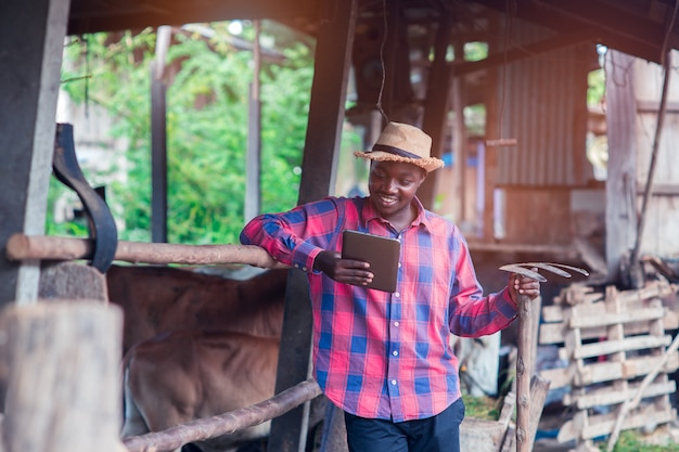 Afrikaanse landbouwersmens die tablet zijn werkplaats dichtbij koeien in het landbouwbedrijf bekijken Premium Foto