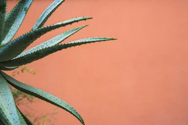 Agaveplant met scherpe doornen op bladeren Gratis Foto