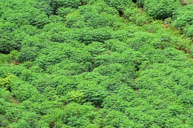 Agrarische gebieden in landelijke gebieden van thailand, longan-tuin, cassava-boerderij, suikerrietcultuurboerderij, landelijke gebieden buiten de stad, luchtfoto Premium Foto