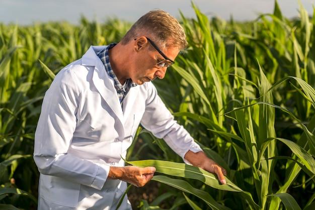 Agronoom die een maïsblad bekijkt Gratis Foto