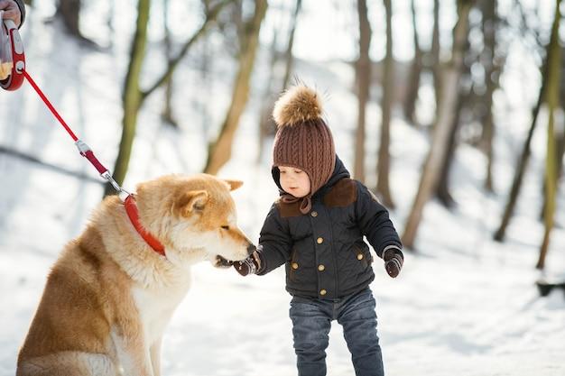 Akita-inu haalt iets uit de hand van de kleine jongen in een winterpark Gratis Foto