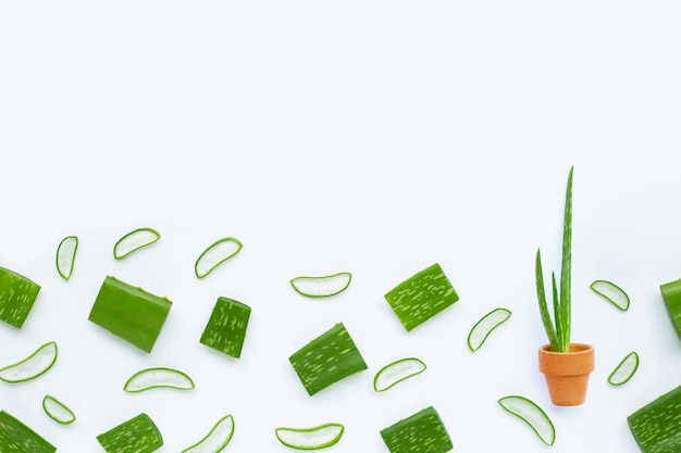 Aloë vera is een populaire medicinale plant voor gezondheid en schoonheid Premium Foto