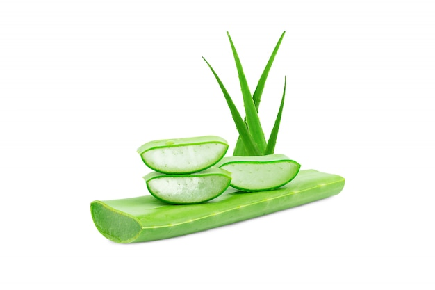 Aloë vera vers geïsoleerd. een zeer nuttige kruidengeneeskunde voor huidverzorging en haarverzorging. Premium Foto
