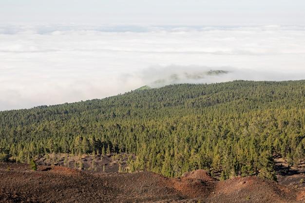 Altijdgroen bos met witte wolken Gratis Foto
