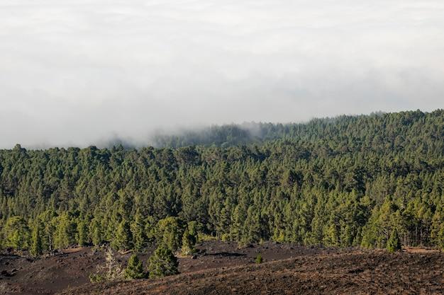 Altijdgroen bos met wolken Gratis Foto