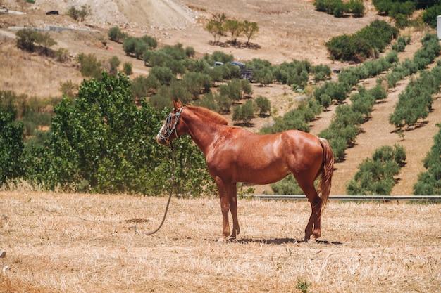 Andalusisch paard Premium Foto