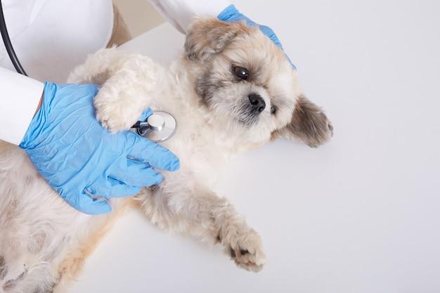 Anonieme dierenarts die pekinese hond met stethoscoop onderzoekt Gratis Foto