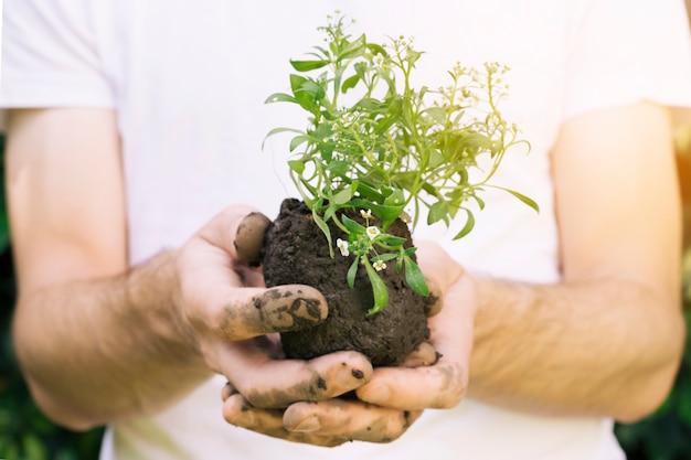 Anonieme man met stapel van grond en plant Gratis Foto