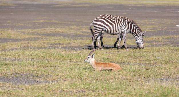 Antilope en zebra op gras Gratis Foto