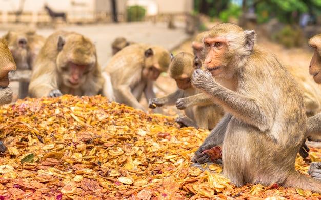 Apen eten, tempel in thailand. Premium Foto