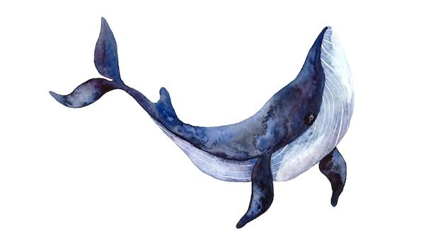 Aquarel blauwe grote walvis, met de hand geschilderde illustratie geïsoleerd op een witte achtergrond, realistische onderwaterdieren. Premium Foto