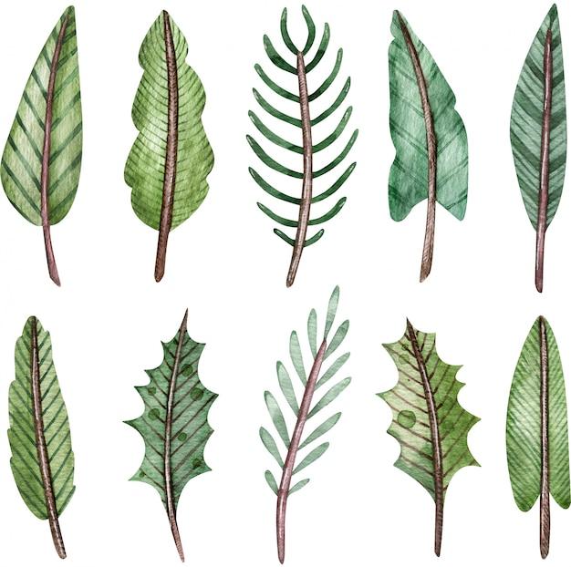 Aquarel collectie van groene boomtakken. spar en vuren twijgen. kerstdecoratie clipart. Premium Foto