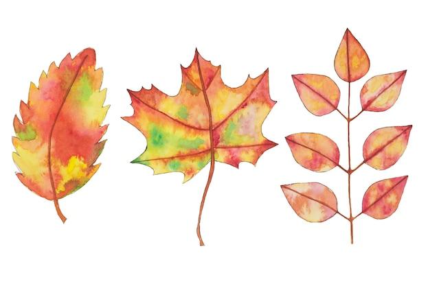 Aquarel herfst, herfst geel, oranje bladeren, hand getrokken ontwerpelementen. Premium Foto