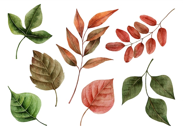 Aquarel herfstbladeren, handgeschilderde illustratie van florale elementen geïsoleerd op een witte Premium Foto