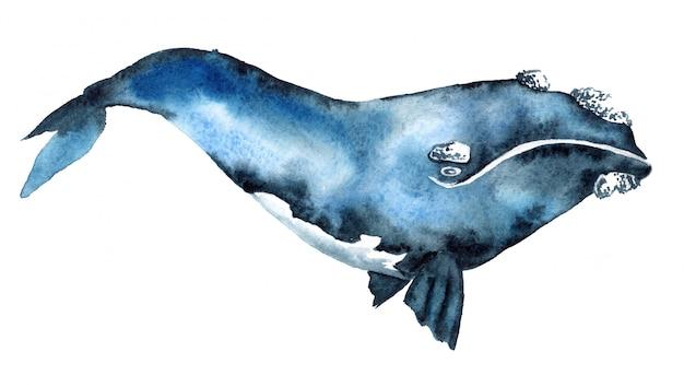 Aquarel illustratie van een blauwe vinvis Premium Foto