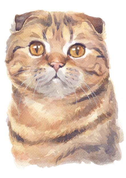 Aquarel schilderij van schotse vouw korthaar cat Premium Foto