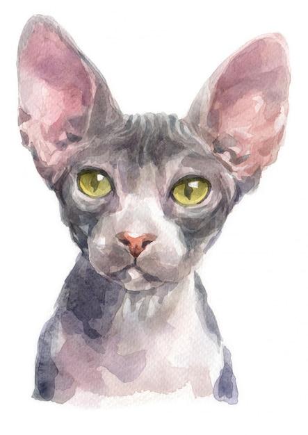 Aquarel schilderij van sphynx cat Premium Foto
