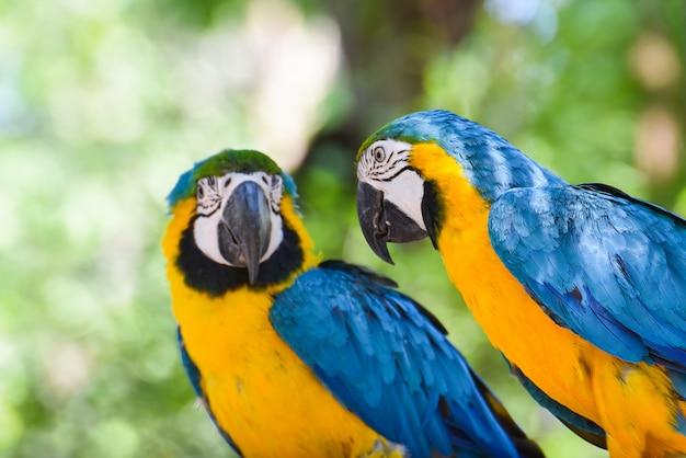 Ara vogel papegaai op tak boom Premium Foto