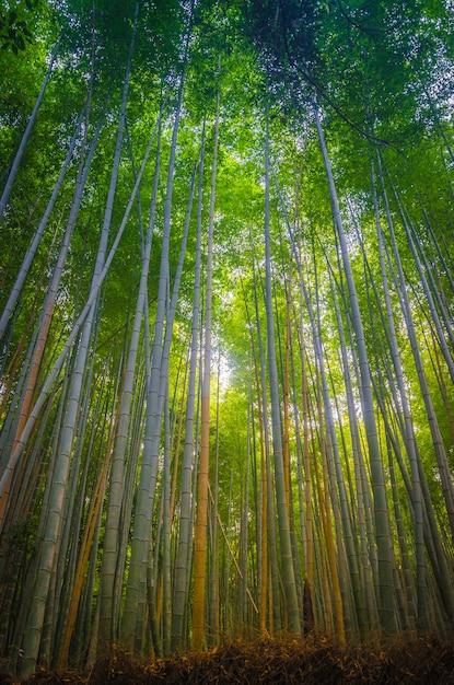Arashiyama bamboo forest kyoto Premium Foto