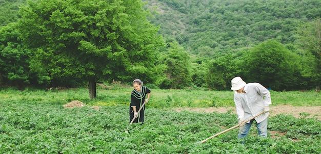 Arbeiders die groenten in het landbouwbedrijf met materiaal planten. Gratis Foto