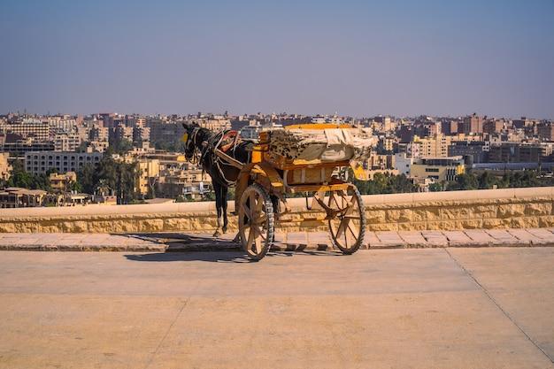 Arbeiders met paarden bij de piramides van gizeh, het oudste grafmonument ter wereld. in de stad caïro, egypte Premium Foto