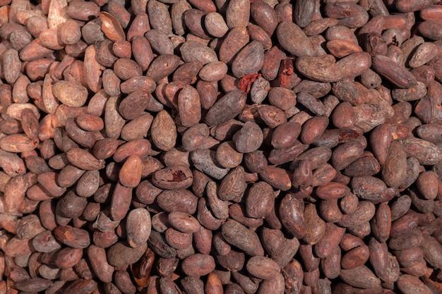 Arbeiders roosterende cacaobonen in een chocoladefabriek Premium Foto