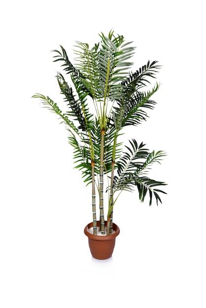 Areca palm geïsoleerd op de witte achtergrond Premium Foto