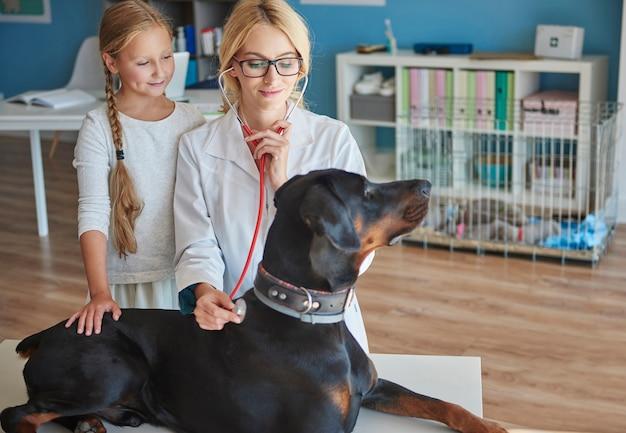 Arts die de gezondheidstoestand van doberman controleert Gratis Foto