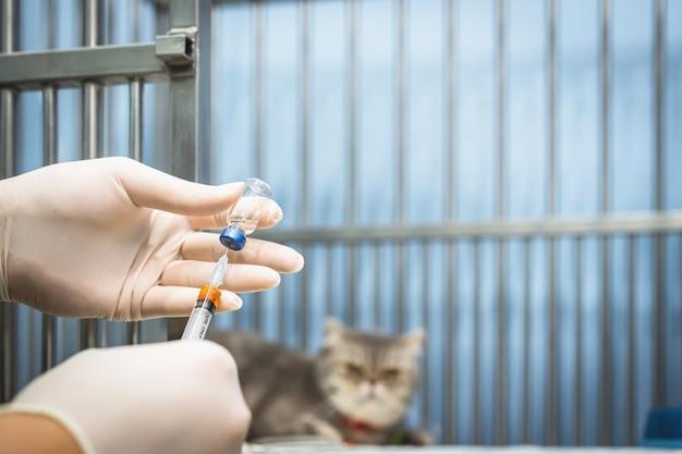 Artsenhand die een spuit houden en een vaccin opstellen in een spuit met schotse vouwen kattenzitting in de kooi Premium Foto