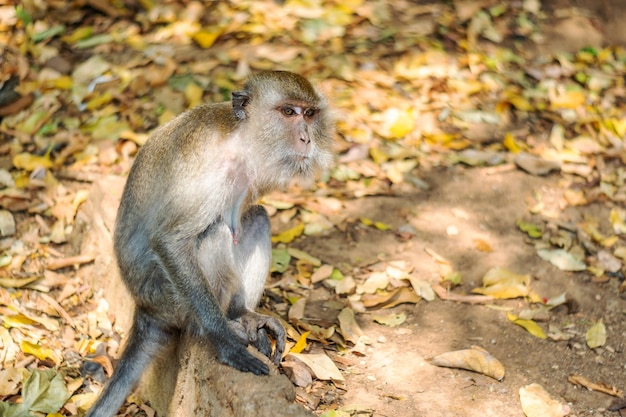 Asia monkey wildlife Premium Foto