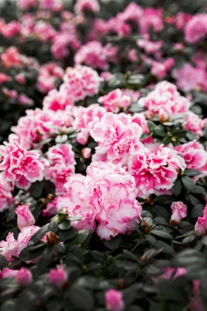Assortiment met mooie roze bloemen Gratis Foto