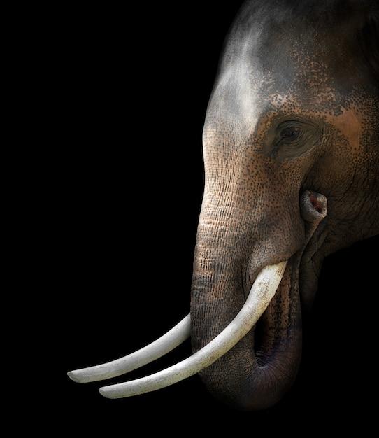 Aziatisch olifantshoofd op zwarte Premium Foto