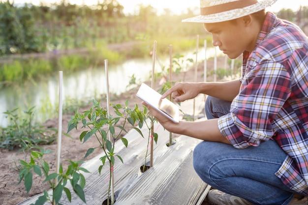 Aziatische boer met behulp van tablet en het controleren van zijn plant of groente (chili boom) Premium Foto