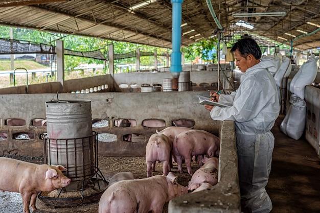 Aziatische dierenarts die en het varken in varkensfokkerijen, dieren en varkensfokkerij werkt controleert Premium Foto