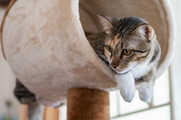 Kattenboom-beelden | Gratis vectoren, stockfoto's & PSD's