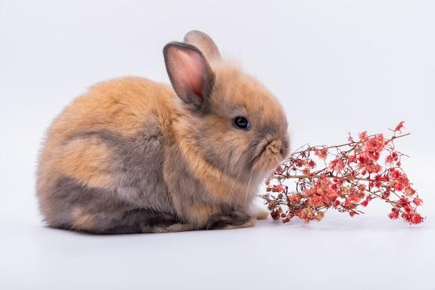 Baby schattige konijnen heeft een puntige oren, bruine vacht en sprankelende ogen en droge bloem Premium Foto