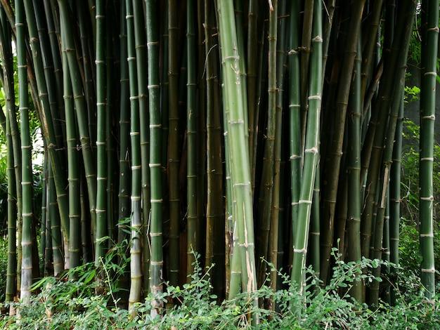 Bamboe boom achtergrond Premium Foto