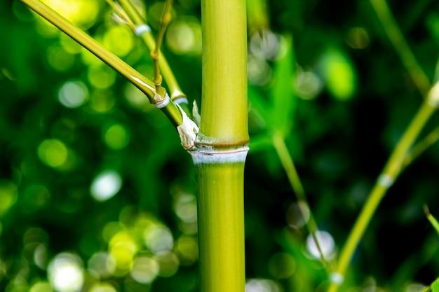 Bamboe dichte omhooggaand Premium Foto