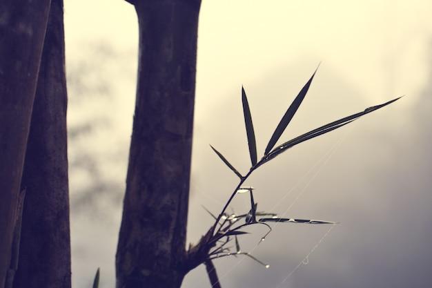 Bamboe en waterdruppels tussen mist Premium Foto