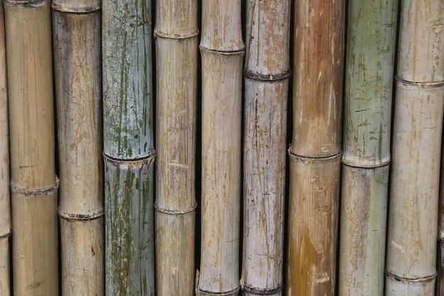 Bamboe plant hek azi muur klimmen foto gratis download - Bamboe hek ...